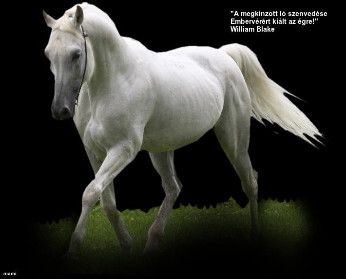 lovas szülinapi köszöntő Idézetes lovas szülinapi köszöntő